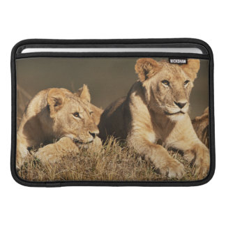 Pride of young male Lions MacBook Sleeve