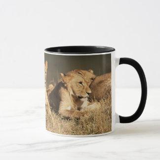Pride of young male Lions Mug
