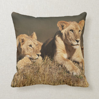 Pride of young male Lions Pillow