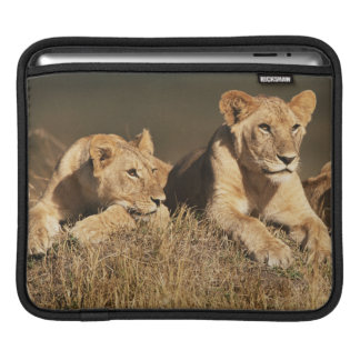Pride of young male Lions Sleeves For iPads