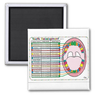 Primary Adult Tooth Eruption Timetable Refrigerator Magnets