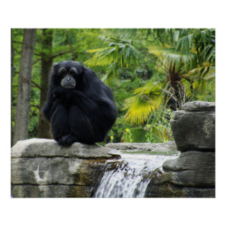 Primate and Waterfall Poster