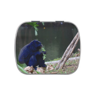 Primate eating greens on edge of land blue jelly belly candy tins
