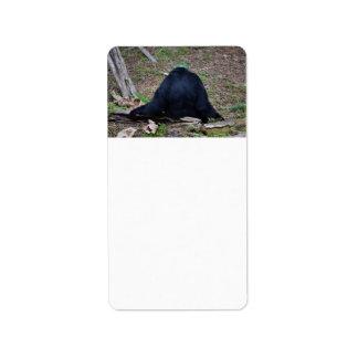 primate from the back sitting animal custom address label