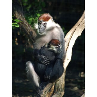 Primate Mom And Baby Poster print