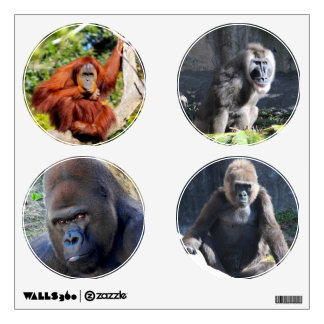 Primate photos Gorilla, Orangutan and Baboon Wall Sticker