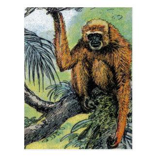 Primates - cuatro postal