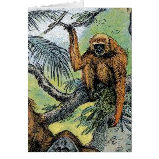 Primates - four cards