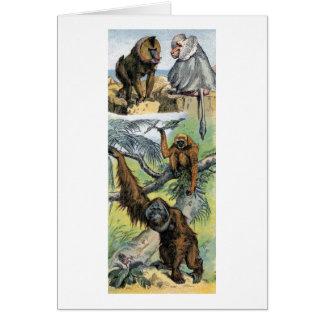 Primates - four greeting card