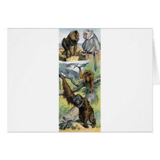 Primates - four greeting cards