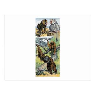Primates - four post cards