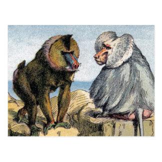 Primates - four postcard