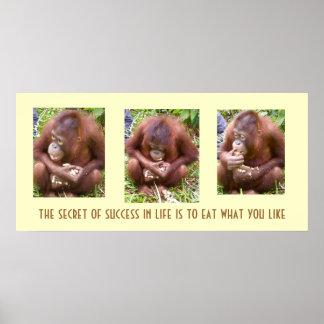 Primates & Peanuts: the secret to success Poster