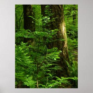 Primavera 1 del paseo del bosque posters