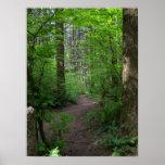 Primavera 3 del paseo del bosque de GT Poster