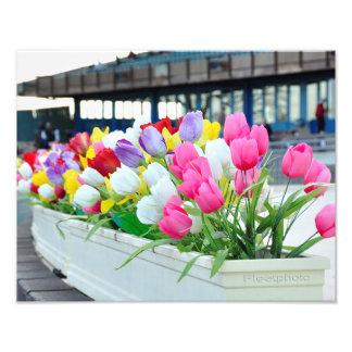 Primavera adelante fotografía