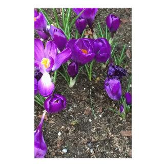 Primavera agradable papeleria