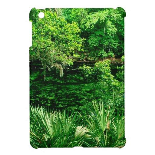 Primavera azul la Florida del río