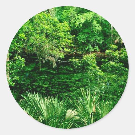 Primavera azul la Florida del río Pegatina Redonda