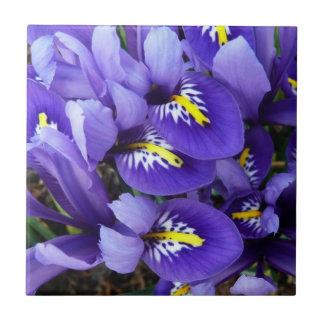 Primavera azul miniatura de los iris floral azulejo cuadrado pequeño