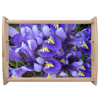 Primavera azul miniatura de los iris floral bandejas