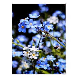 Primavera azul postales