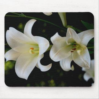 Primavera Daffodiles Tapete De Ratones
