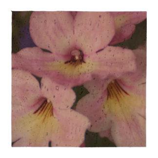 Primavera de cabo rosada posavasos