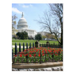 Primavera del edificio del capitolio de los E.E.U. Tarjeta Postal
