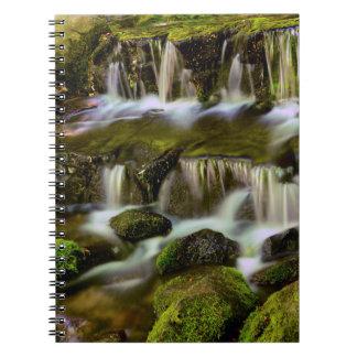 Primavera del helecho, parque nacional de note book