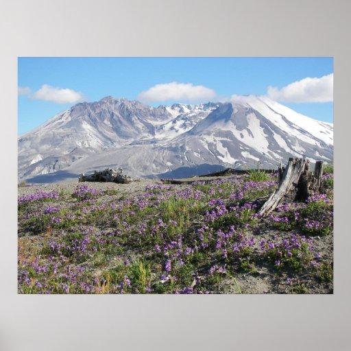 Primavera del Monte Saint Helens Póster