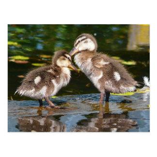 Primavera Duckies Postales