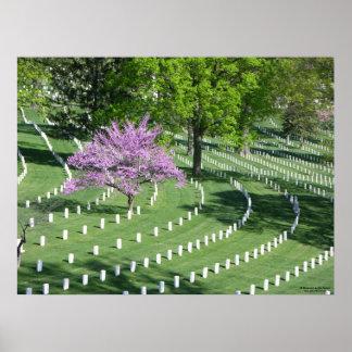 Primavera en el cementerio nacional de Arlington Póster