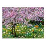 Primavera en el jardín de Claude Monet Tarjetas Postales