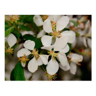 Primavera en la floración postal