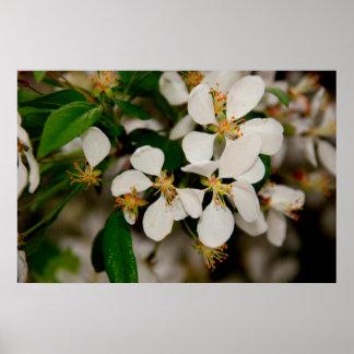 Primavera en la floración póster