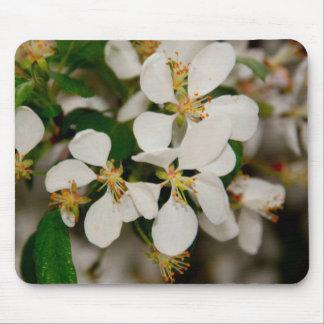 Primavera en la floración tapete de ratones