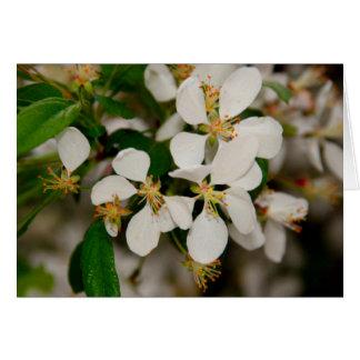 Primavera en la floración tarjeta de felicitación