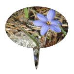 Primavera en las flores púrpuras del iris de las m figura de tarta