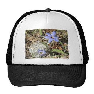 Primavera en las flores púrpuras del iris de las m gorros