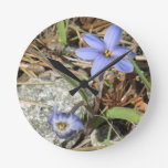 Primavera en las flores púrpuras del iris de las m relojes