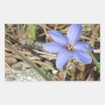 Primavera en las flores púrpuras del iris de las rectangular pegatina
