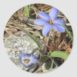 Primavera en las flores púrpuras del iris de las pegatinas redondas