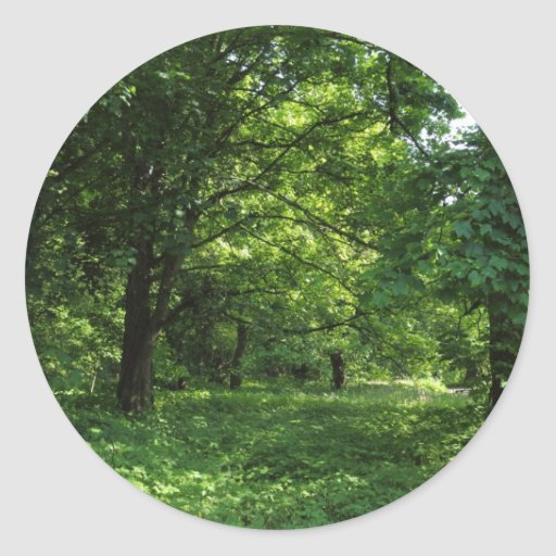 Primavera en las maderas 01 pegatina redonda