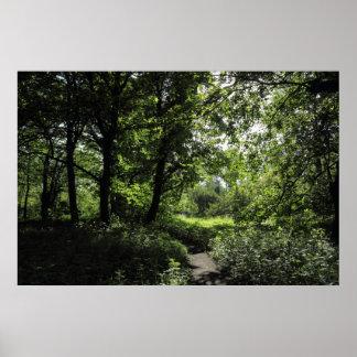Primavera en las maderas 03 impresiones