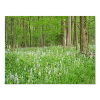 Primavera en las maderas poster