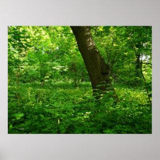 Primavera en las maderas impresiones