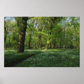 Primavera en las maderas, parque del Bute, Cardiff Impresiones