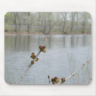 Primavera en Minnesota 4 Alfombrilla De Raton