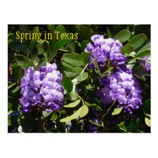 Primavera en Tejas Postales